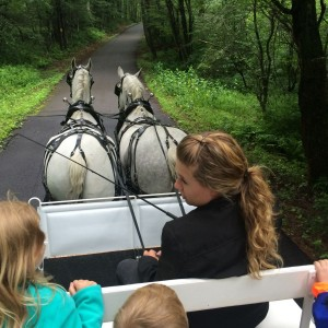 Percheron Carriage Rides